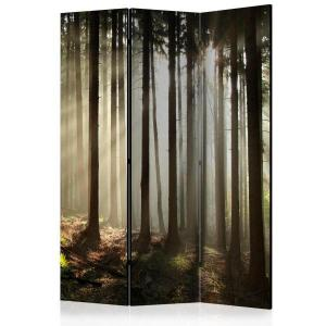 Rumsavdelare - Coniferous forest - SilentSwede