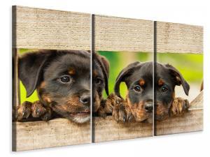 Ljuddämpande tavla - 2 rottweiler puppies - SilentSwede