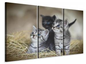 Ljuddämpande tavla - Kitten trio - SilentSwede
