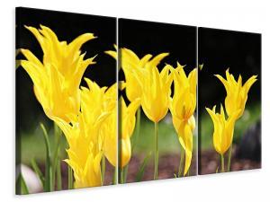 Ljuddämpande tavla - Yellow tulips in the nature - SilentSwede
