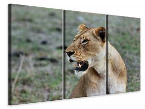 Ljuddämpande tavla - Magnificent lioness - SilentSwede