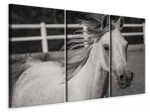 Ljuddämpande tavla - There is a horse - SilentSwede