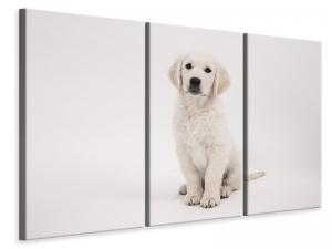 Ljuddämpande tavla - Sweet golden retriever puppy - SilentSwede
