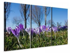 Ljuddämpande tavla - Purple crocus in nature - SilentSwede