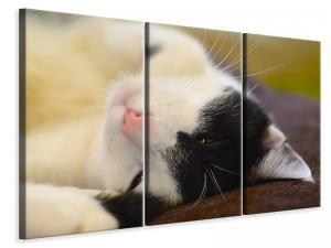 Ljuddämpande tavla - Cuddly cat - SilentSwede