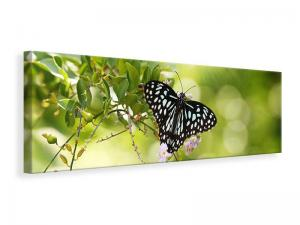 Ljuddämpande tavla - Papilio Butterfly XXL - SilentSwede
