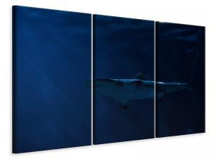 Ljuddämpande tavla - Dangerous shark - SilentSwede