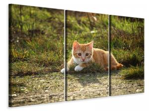 Ljuddämpande tavla - Kitten in nature - SilentSwede