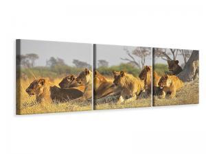 Ljuddämpande tavla - Lion family - SilentSwede