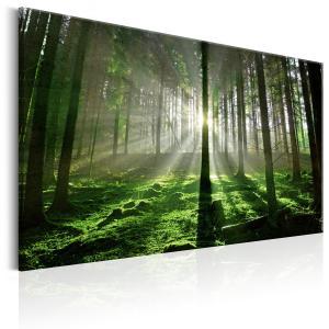Ljuddämpande & ljudabsorberande tavla - Emerald Forest II - SilentSwede
