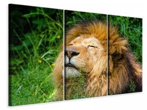 Ljuddämpande tavla - Sleeping lion - SilentSwede