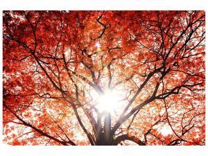 Ljudabsorberande tavla - Light Of Autumn - SilentSwede