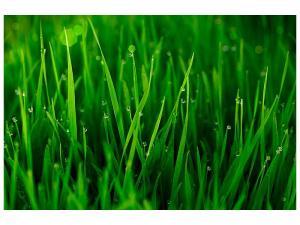 Ljudabsorberande tavla - Grass With Morning Dew - SilentSwede