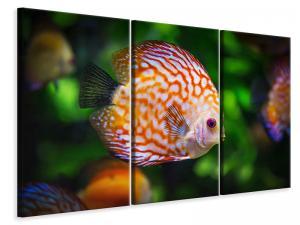 Ljuddämpande tavla - The discus fish - SilentSwede
