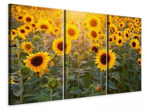 Ljuddämpande tavla - Sunflower field - SilentSwede