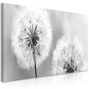 Ljuddämpande tavla - Fluffy Dandelions Grey Wide - SilentSwede