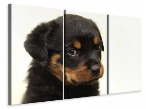 Ljuddämpande tavla - Rottweiler puppy to fall in love - SilentSwede