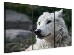 Ljuddämpande tavla - The lonely wolf - SilentSwede