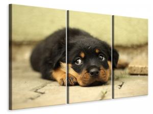 Ljuddämpande tavla - Sweet rottweiler puppy - SilentSwede