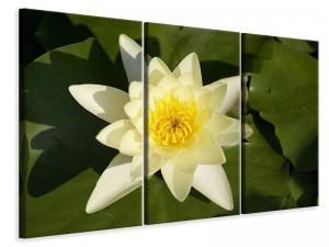 Ljuddämpande tavla - The water lily in yellow - SilentSwede