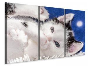 Ljuddämpande tavla - Sweet kitten - SilentSwede