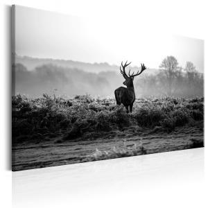 Ljuddämpande & ljudabsorberande tavla - Deer in the Wild - SilentSwede