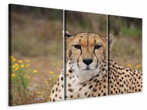 Ljuddämpande tavla - Cheetah xl - SilentSwede