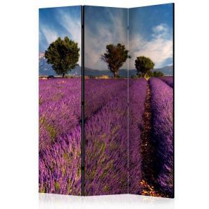 Rumsavdelare - Lavender field in Provence, France - SilentSwede