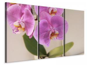 Ljuddämpande tavla - Orchids with purple flowers in xl - SilentSwede