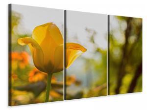 Ljuddämpande tavla - Yellow tulip in the nature - SilentSwede