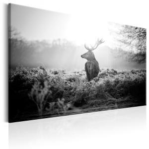 Ljuddämpande & ljudabsorberande tavla - Black and White Deer - SilentSwede