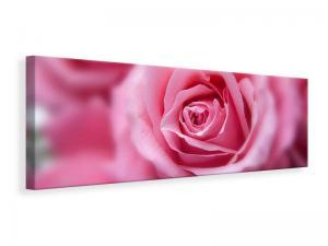 Ljuddämpande tavla - Roses macro - SilentSwede