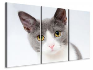 Ljuddämpande tavla - Noble cat - SilentSwede