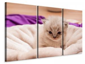 Ljuddämpande tavla - Kitten to fall in love - SilentSwede