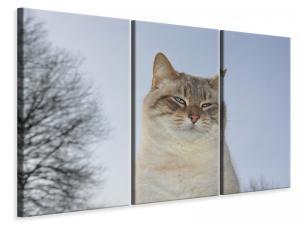 Ljuddämpande tavla - Relaxed cat in the nature - SilentSwede