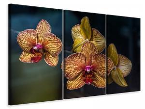 Ljuddämpande tavla - Orchidaceae - SilentSwede