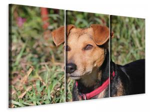 Ljuddämpande tavla - Attentive dog - SilentSwede