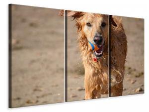 Ljuddämpande tavla - Wet dog - SilentSwede