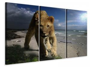 Ljuddämpande tavla - A lioness on the beach - SilentSwede