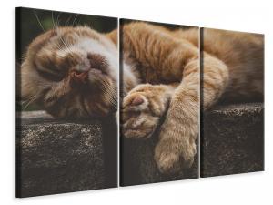 Ljuddämpande tavla - Sleeping cat - SilentSwede