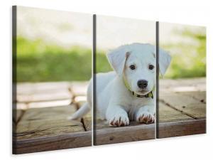 Ljuddämpande tavla - Cute dog baby - SilentSwede