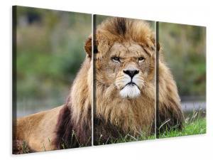 Ljuddämpande tavla - The king of animals - SilentSwede