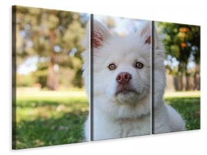 Ljuddämpande tavla - Sweet dog snout - SilentSwede