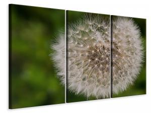 Ljuddämpande tavla - The dandelion in nature - SilentSwede