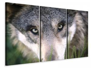 Ljuddämpande tavla - The wolf39s look - SilentSwede