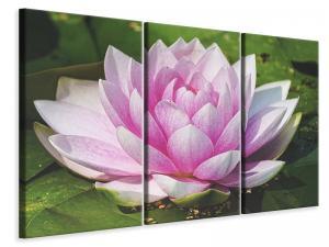 Ljuddämpande tavla - Water lily in pink - SilentSwede