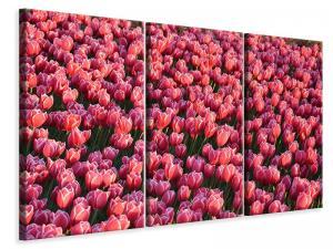 Ljuddämpande tavla - Lush tulip field - SilentSwede