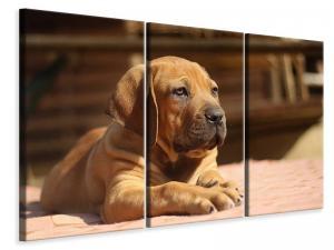 Ljuddämpande tavla - Sad dog look - SilentSwede