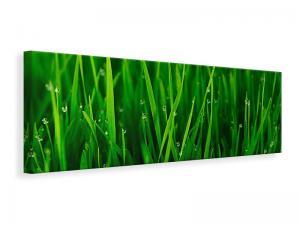 Ljuddämpande tavla - Grass With Morning Dew - SilentSwede
