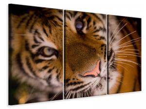 Ljuddämpande tavla - Tiger face - SilentSwede